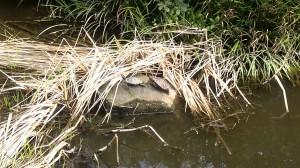 葛西用水親水水路